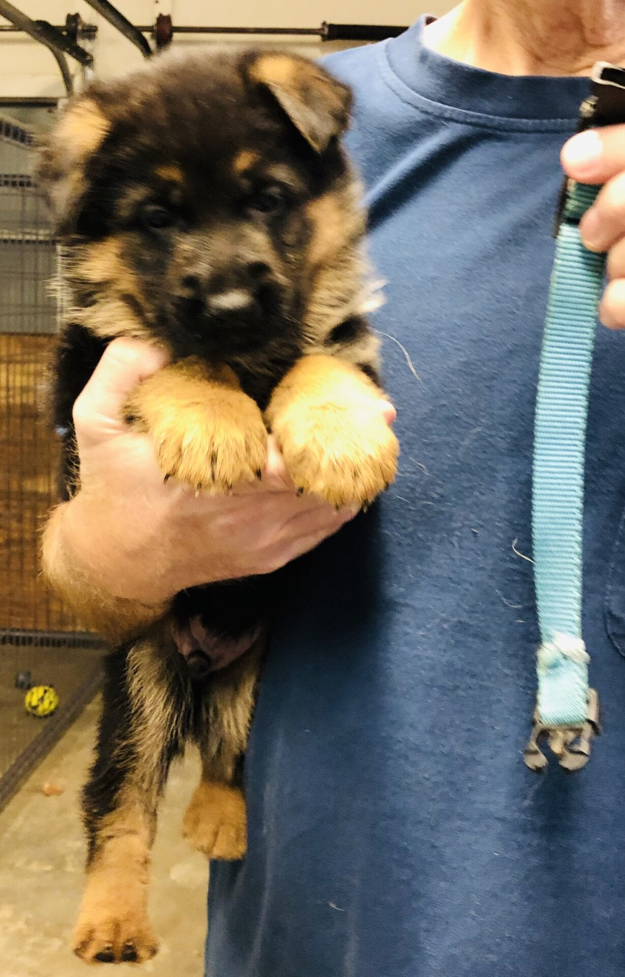 Purchase German Shepherd Puppies For Sale Akc Up To 77 Off
